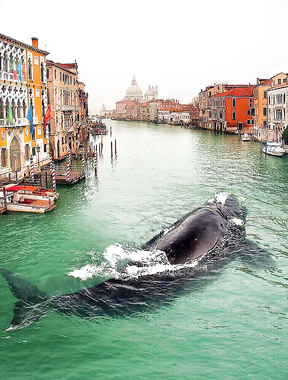 Whale in Venice Italy.