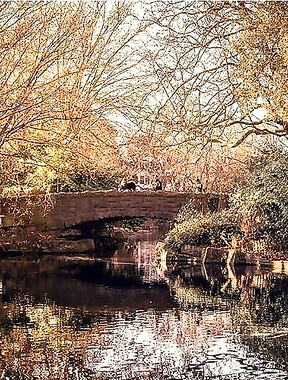 St Stephen's Green park looking golden and gorge.