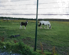 Cute little horse near Dublin Airport