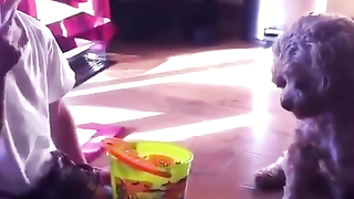 Funny videos and pranks compilation