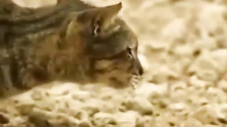 Cat hunting for flying rats.