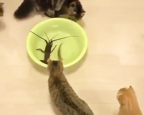 Cute and curious cats