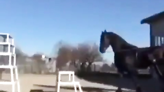 Awesome, amazing horse.