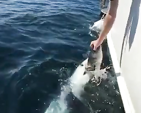 Omg don't treat sharks like dogs, you can lose...