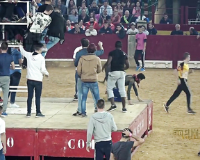 The Best Funny Bullfighting ever❗❗