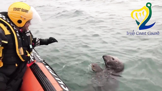 Friendly Seal waves at Coast Guard in Howth