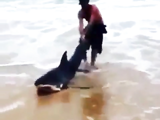 Man helping an shark to get back into.. Balls of steel.