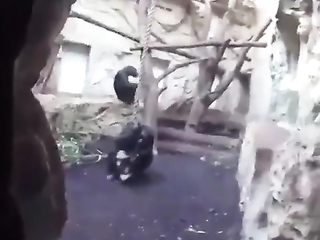 Even the chimps protect they'r you from that.