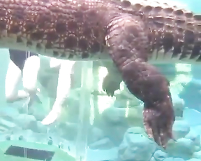 Would you swim with crocodiles like that?