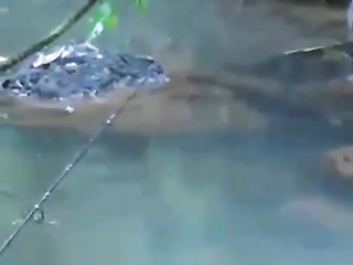 Whoao. That fish attack its like one explosion.
