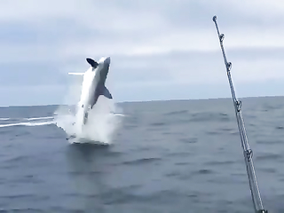 Amazing Fishing and what a jumps!