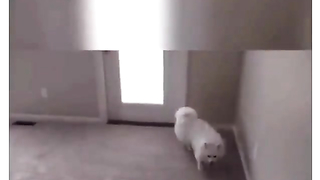 Dog first time using stairs. Lol