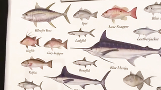 All Gulf of Mexico Fish.