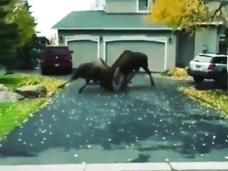 Just a normal day on Canadian streets.