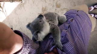 I've never seen a koala to move that much.