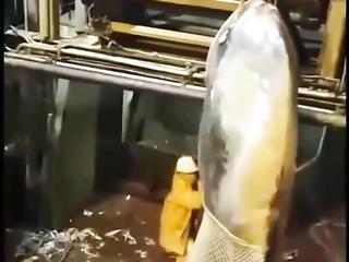 What a Fish is this?