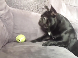Dogs Who Fail At Being Dogs.