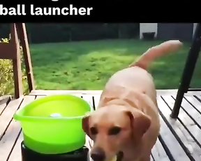 Hi loves this automatic ball Launcher