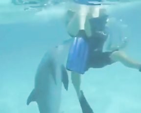 Dolphins rape people