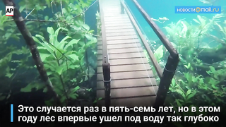 In Brazil, the forest went under the water.