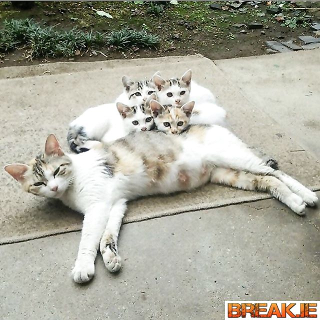 So cute! What a lovely family.