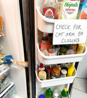 Funny Sign: Check for the cat arms before closing the fridge