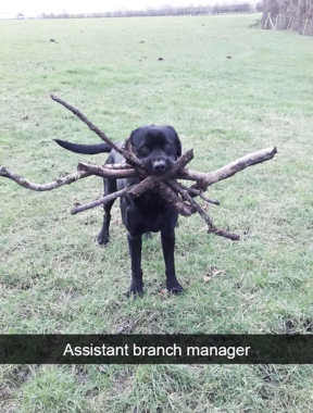 ASSISTANT BRANCH MANAGER!