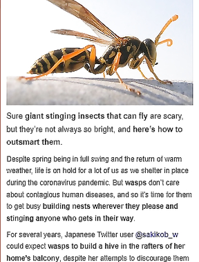 how to keep wasps away from your home in seconds with no chemicals