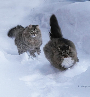 What fluffy they are))