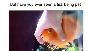 Have you ever seen a fish like a pet.
