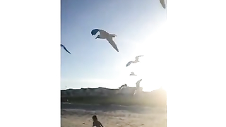 Don't feed seagulls kids or you will....