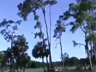 The man on the tree.