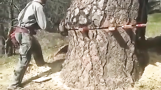 What nature made in centuries, man can destroy..