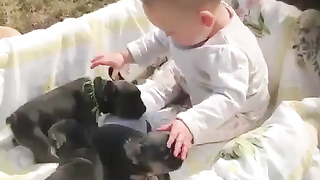Nothing cutlery then baby and puppies