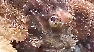 Amazing fish, and ways to hide.
