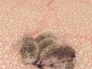 I don't know what are those but they are cute.
