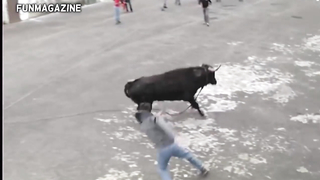 funny bull fighing and runung festival. lol