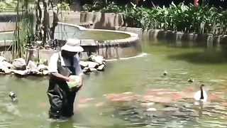 Fish following the man with the food, so interesting.