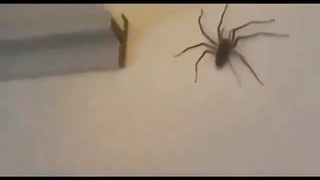 Omg that actually scared me when it jumped