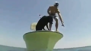 Dogs diving