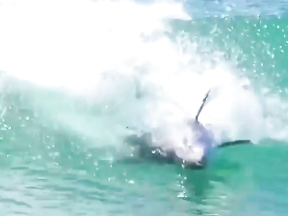 Dolphins surfing.