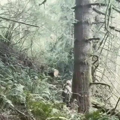 Humans cutting trees.