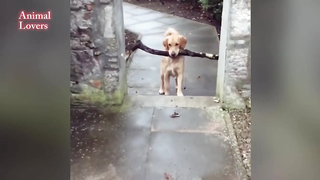 Funny dogs.