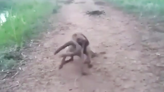 Curious dog trying electric eel.