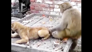 Animal Pranks fail compilation.