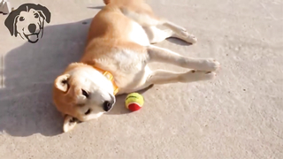 Most Funny Dog Fails Compilation.