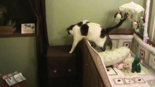 Sneaky Cat Fails