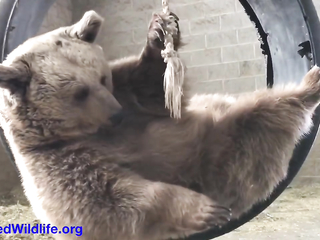 Lovely video with a bear!