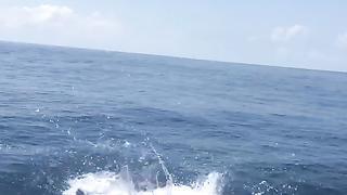 Pacific sailfish caught and released.
