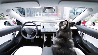 Introducing Dog Mode: set a cabin temperature to..
